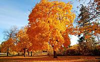 landscape_astonishing_nature_quality_trees_background_picture-111.jpg