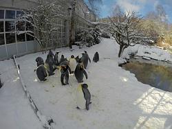 zoo-zurich-1-.jpg
